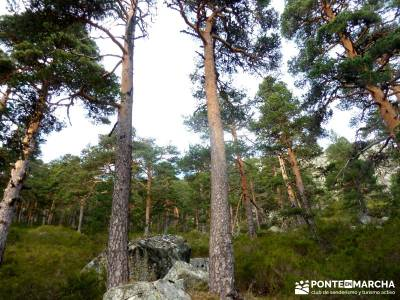 Siete Picos:Senda Herreros,Camino Schmid(Schmidt); excursiones por madrid; rutas montaña;excursione